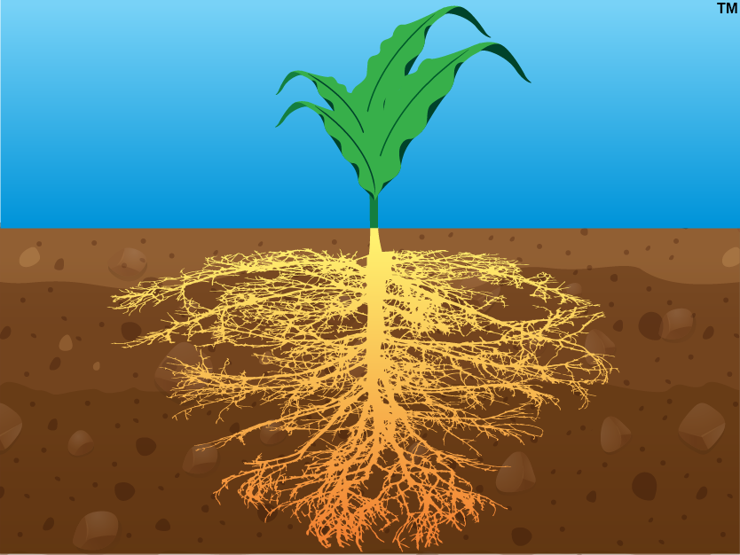 ARPA-E ROOTS Program Graphic
